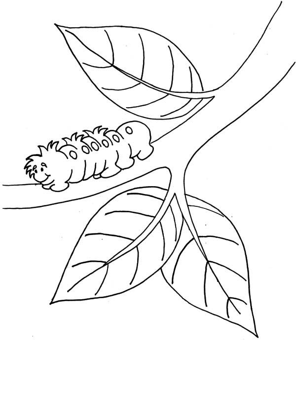branch coloring page huckleberry branch coloring page free printable coloring branch page coloring