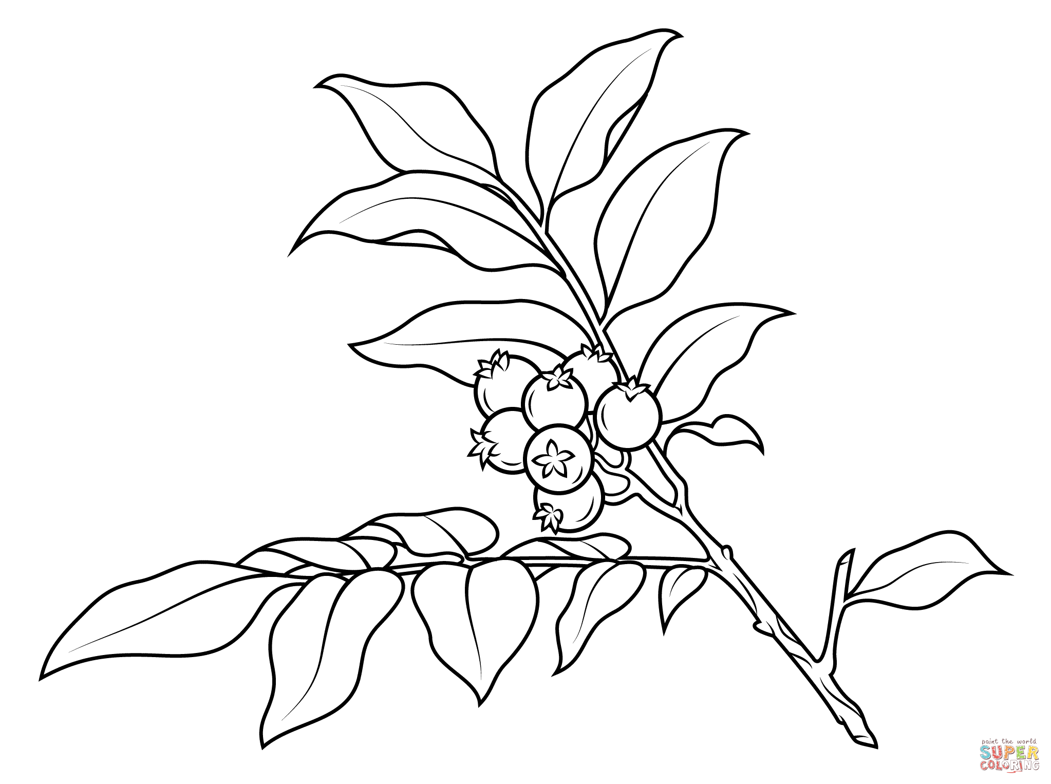 branch coloring page maple tree branch with maple leaf coloring page kids branch coloring page