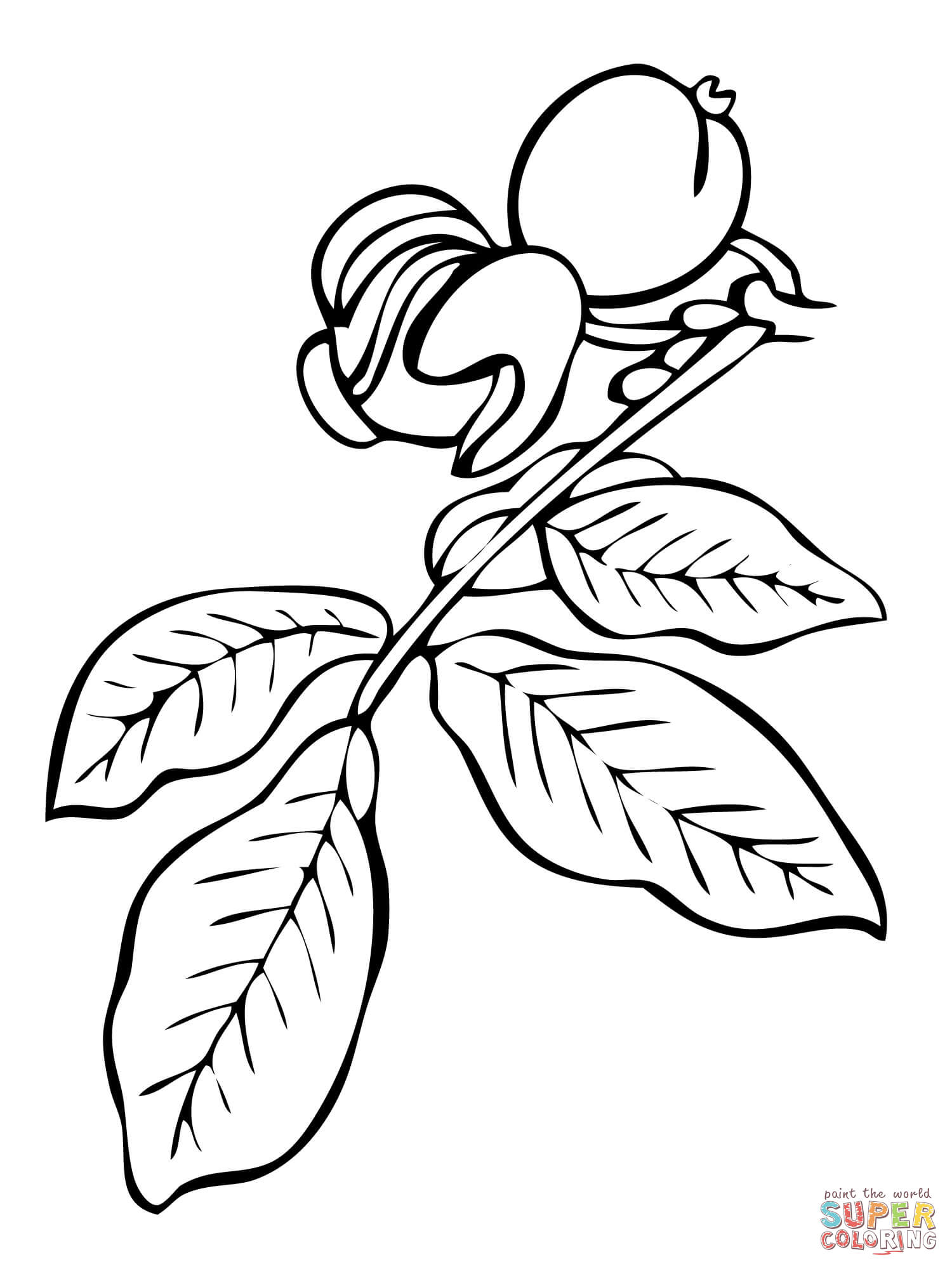 branch coloring page tree branches coloring pages clipart best page branch coloring