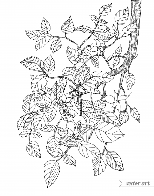branch coloring page walnut tree branch coloring page free printable coloring page coloring branch