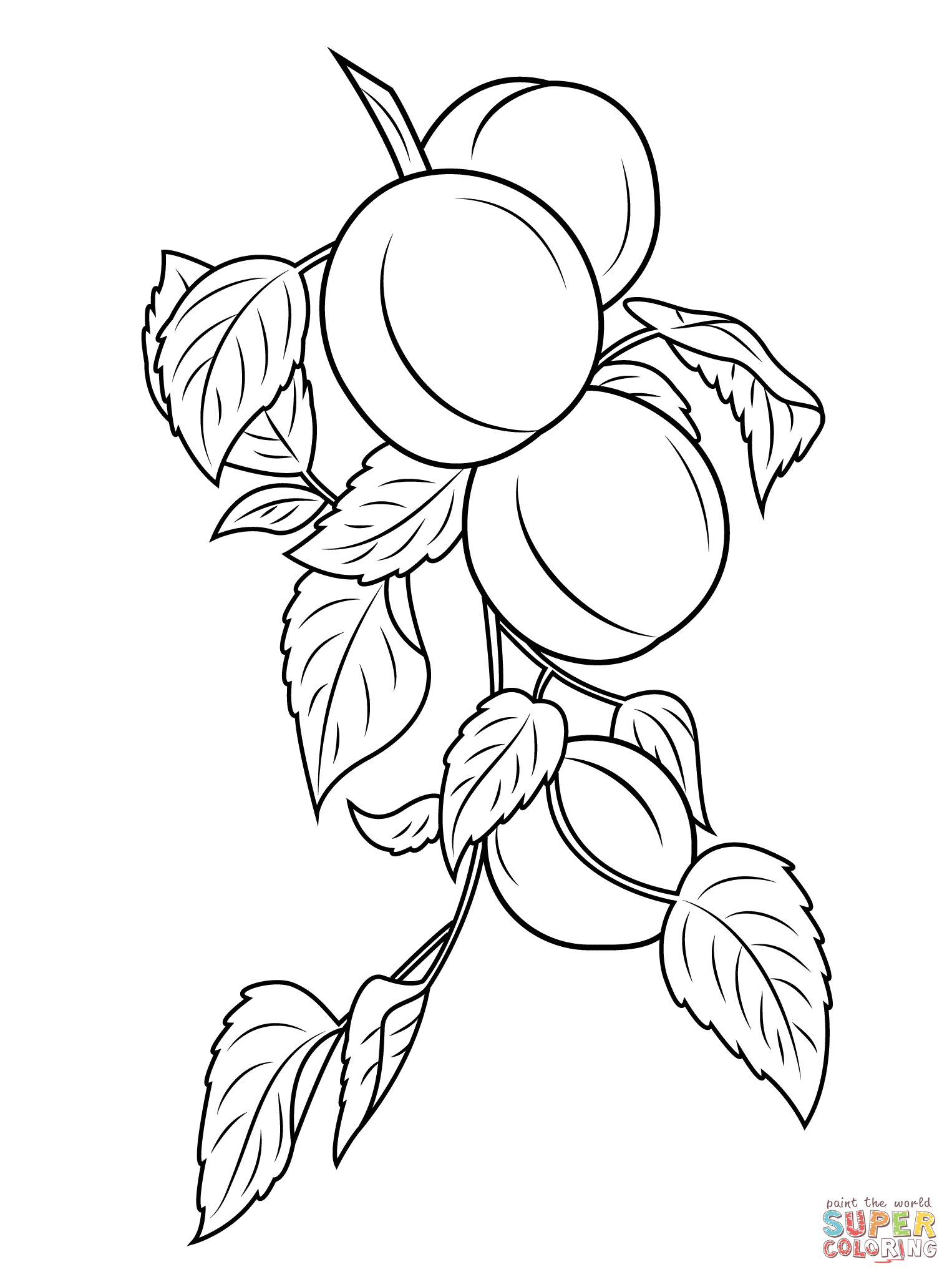 branch coloring page willow tree branches drawing sketch coloring page page coloring branch