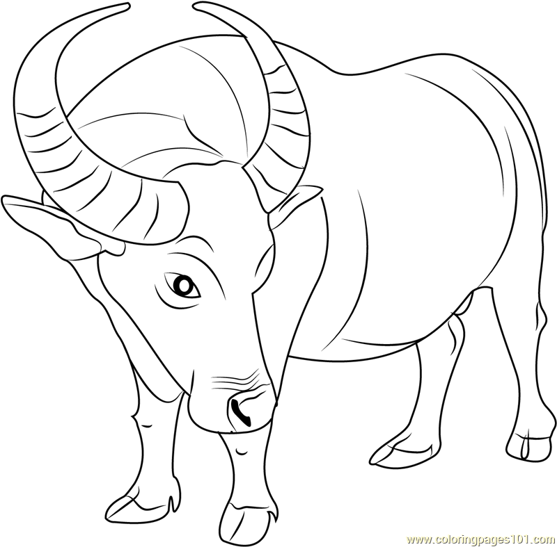 buffalo coloring pages african buffalo coloring page animals town animal coloring pages buffalo