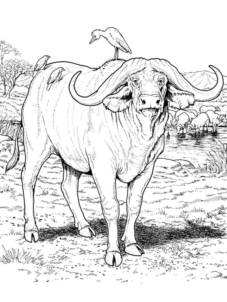 buffalo coloring pages buffalo coloring pages coloring pages to download and print buffalo coloring pages