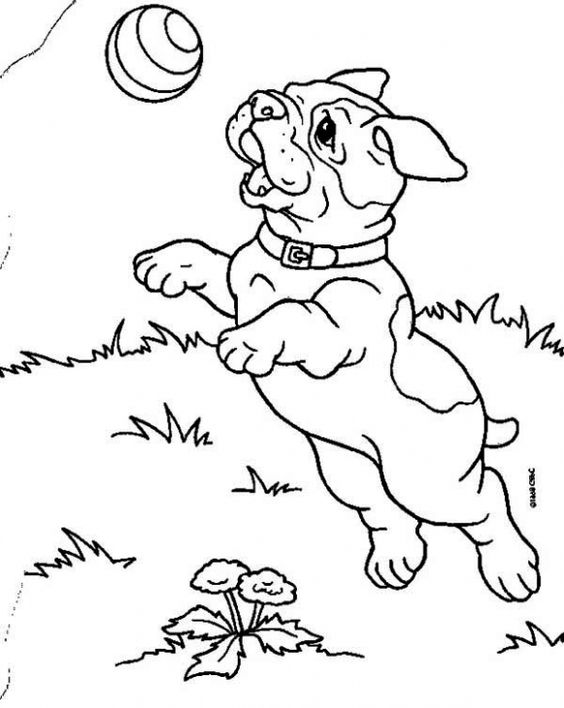 bulldog puppy coloring pages a bulldog puppy catching a ball coloring page animal puppy pages bulldog coloring