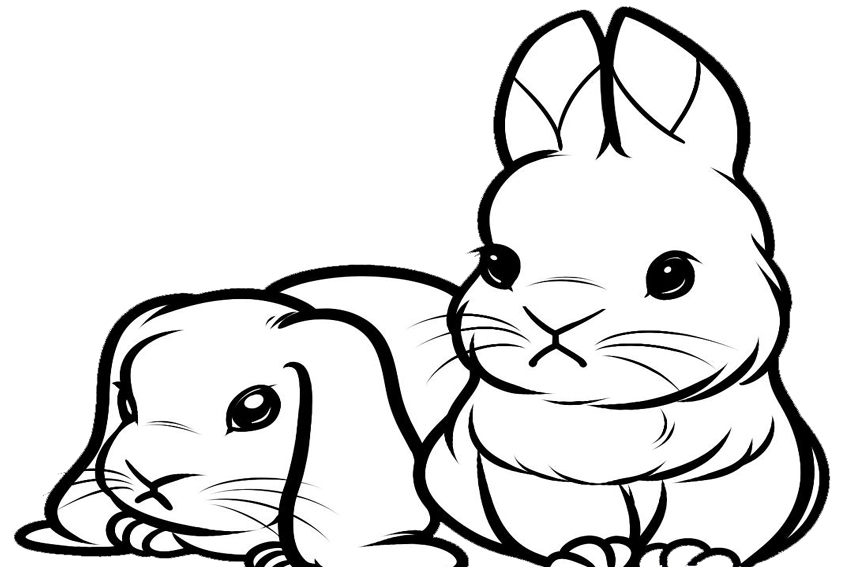 bunny color sheet cute bunny coloring pages to download and print for free sheet bunny color