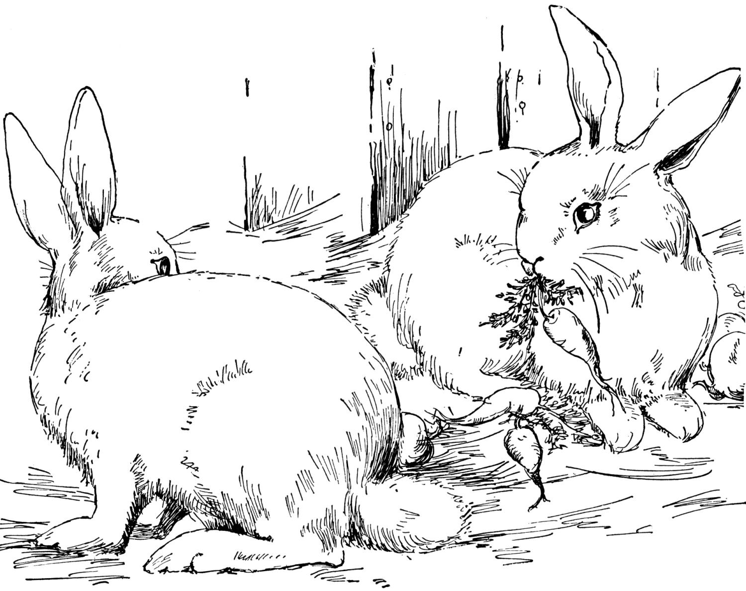 bunny coloring book free rabbit coloring pages bunny coloring book