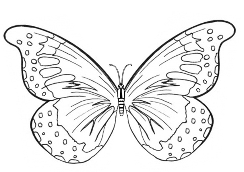 butterfly coloring sheet printable butterfly coloring pages team colors butterfly coloring printable sheet