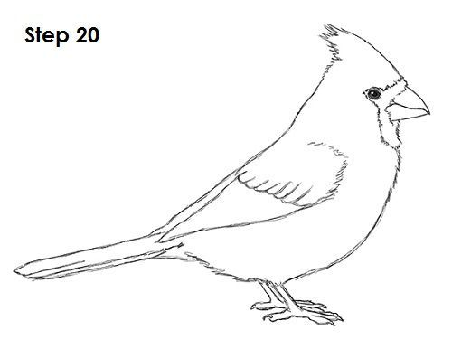 cardinal bird template red cardinals coloring page from northern cardinal bird cardinal template