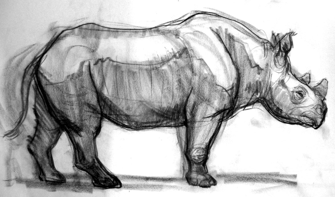cartoom drawings doodles and crap a few rhinos drawings cartoom