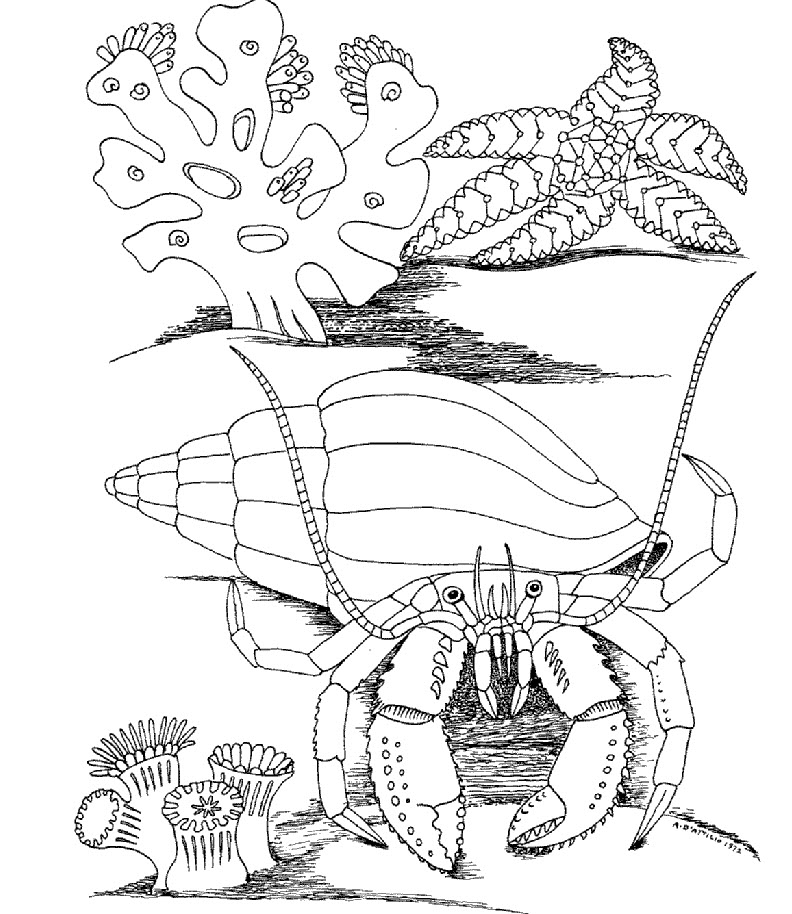 cartoon underwater coloring pages underwater coloring pages to download and print for free coloring underwater pages cartoon