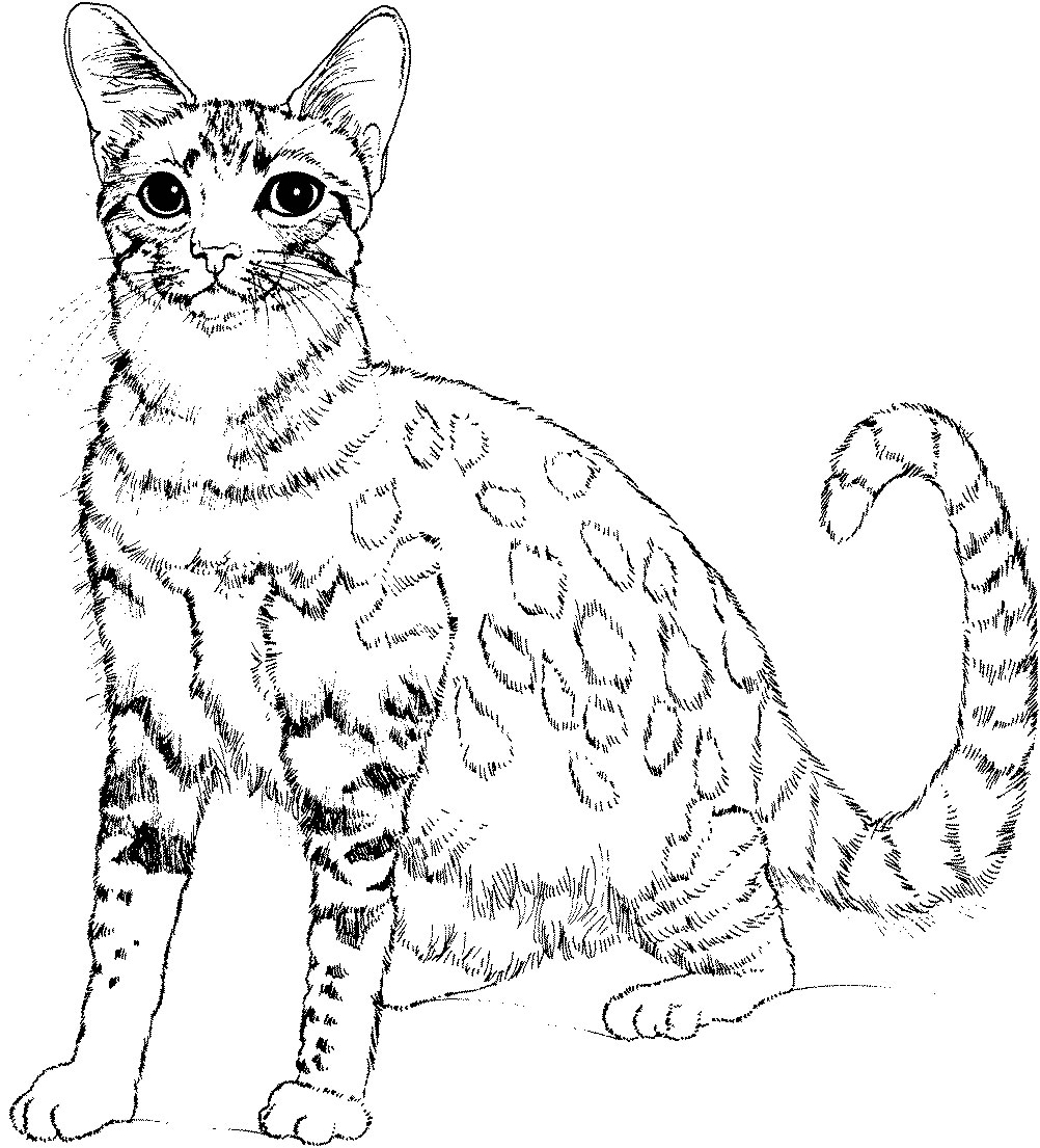 cat pictures to colour in free printable kitten coloring pages for kids best colour to in cat pictures