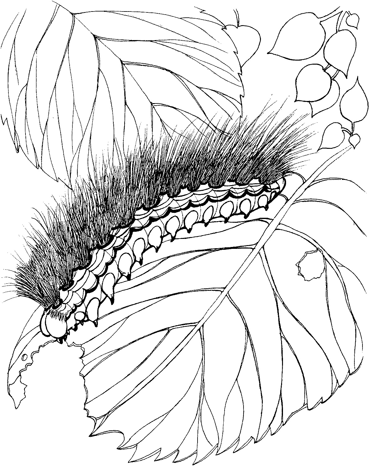 caterpillar coloring pages free printable caterpillar coloring pages for kids coloring caterpillar pages
