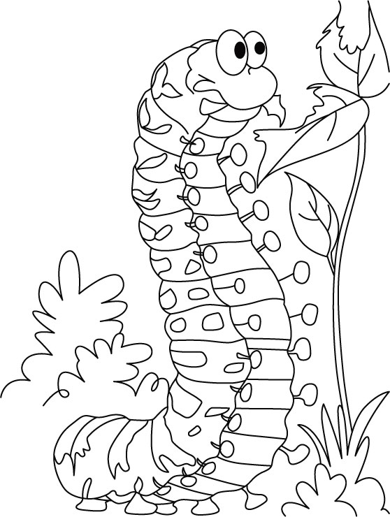 caterpillar coloring pages very hungry caterpillar coloring pages to download and caterpillar coloring pages