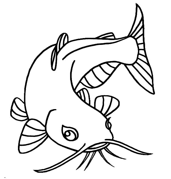 catfish coloring pictures catfish clipart coloring page catfish coloring page catfish pictures coloring
