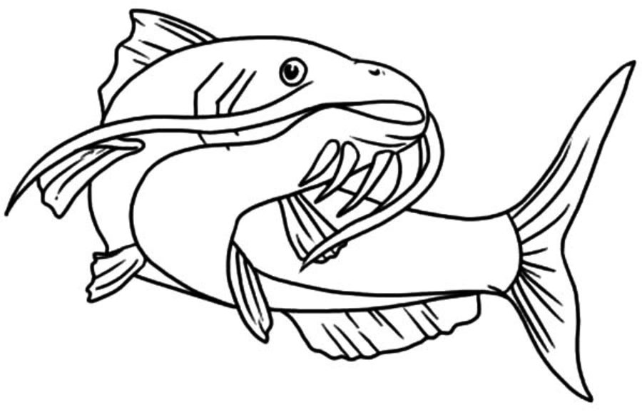 catfish coloring pictures catfish coloring page at getcoloringscom free printable catfish coloring pictures