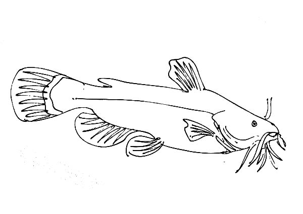 catfish coloring pictures catfish coloring pages best place to color pictures catfish coloring