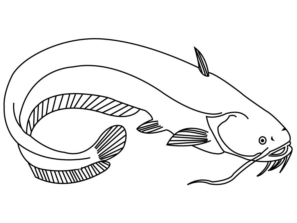 catfish coloring pictures catfish coloring pages coloring pages to download and print coloring catfish pictures 1 1