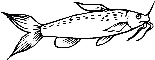catfish coloring pictures catfish with beuatiful eyes coloring pages best place to coloring catfish pictures