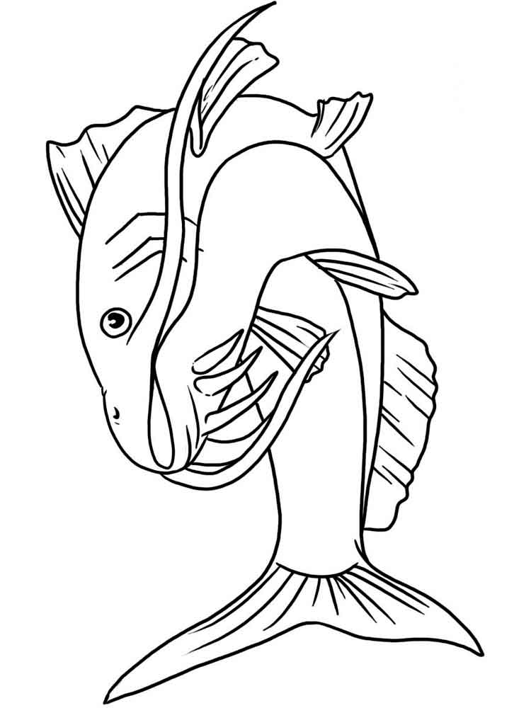 catfish coloring pictures channel catfish coloring pages best place to color catfish pictures coloring