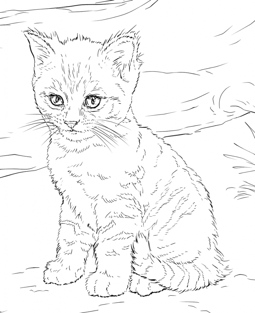 cats pictures to color cat coloring pages at getcoloringscom free printable pictures cats to color