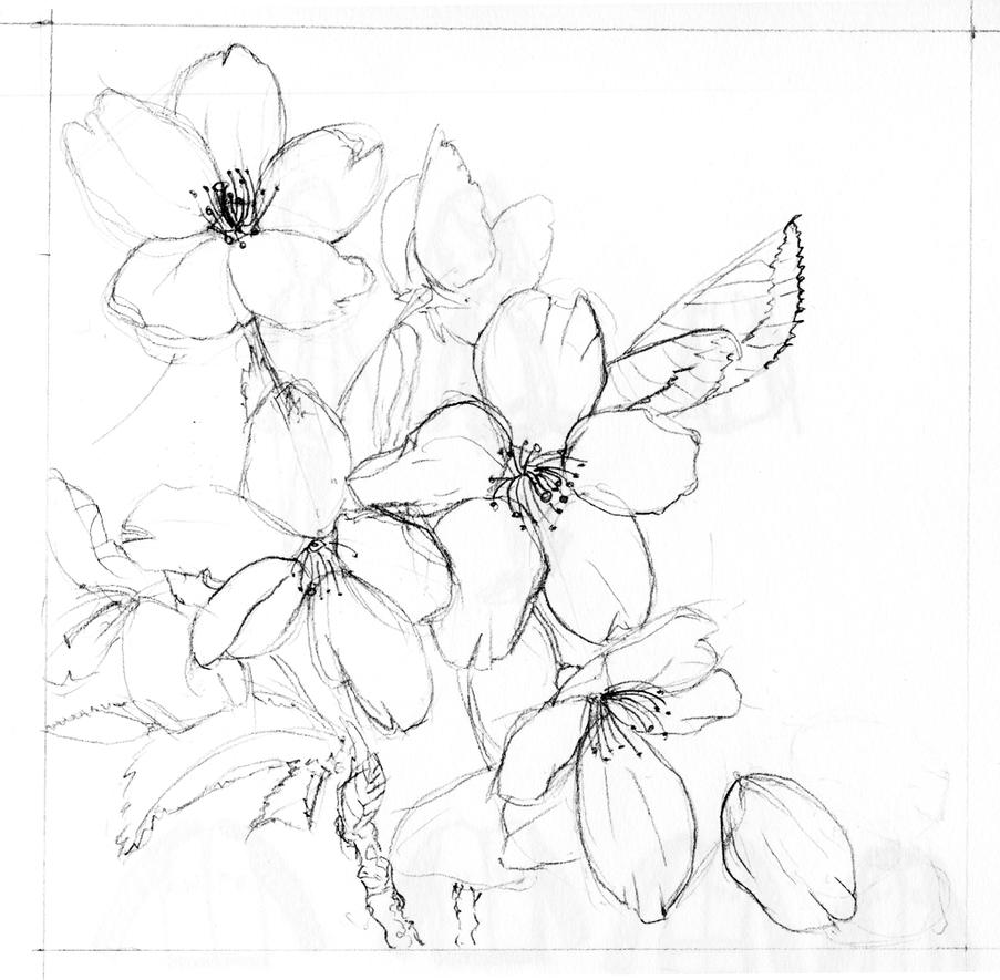 cherry blossom sketch cherry blossom flower drawing at getdrawings free download blossom sketch cherry