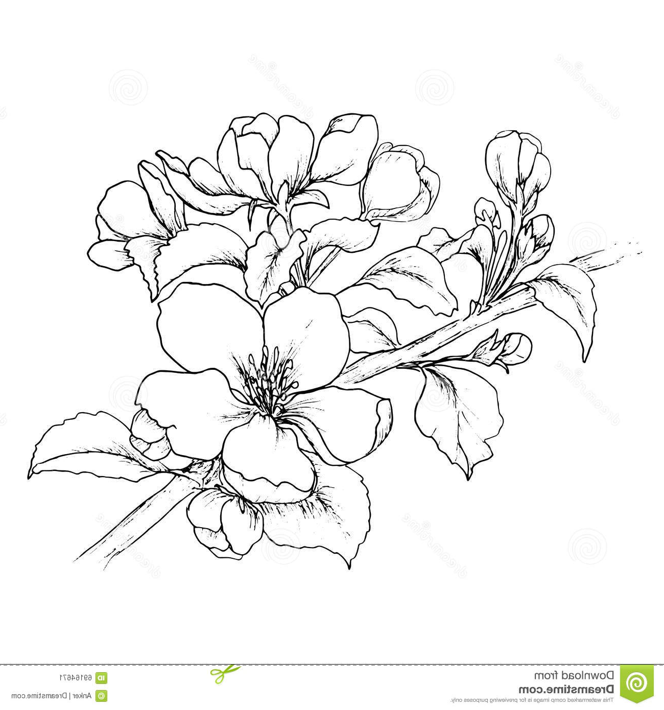 cherry blossom sketch cherry blossom pencil drawing at getdrawings free download blossom sketch cherry