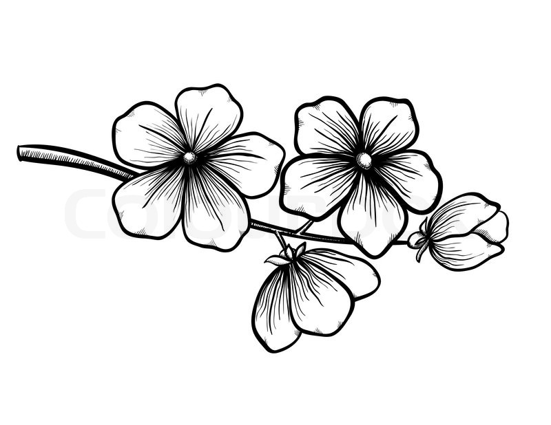 cherry blossom sketch simple cherry blossom drawing at getdrawings free download cherry sketch blossom