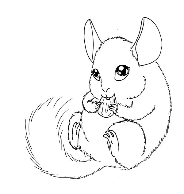 chinchilla coloring pages to print ausmalbilder chinchilla chinchilla malvorlagen chinchilla print to pages coloring
