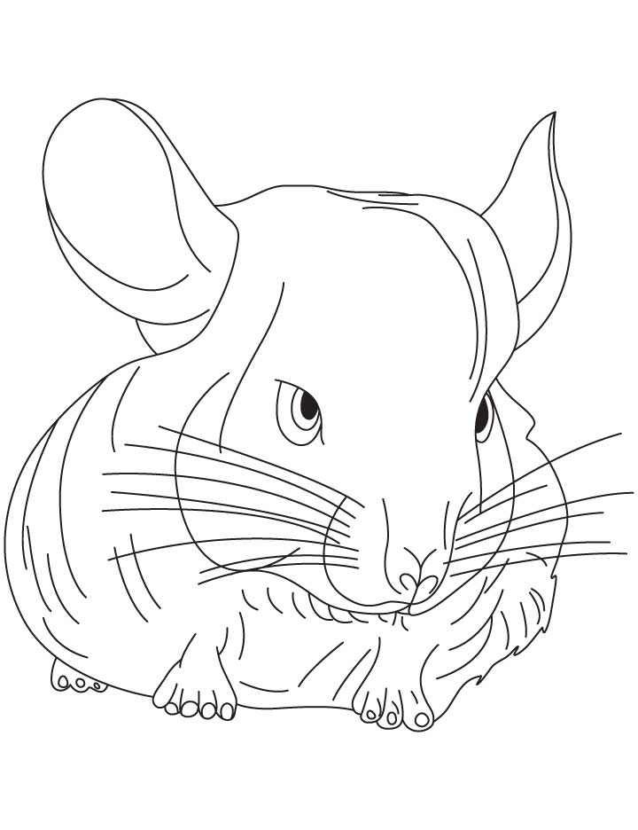 chinchilla coloring pages to print chinchilla coloring page animals town animals color coloring pages chinchilla to print