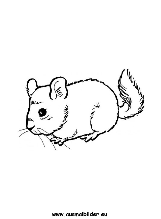 chinchilla coloring pages to print chinchilla coloring page animals town free chinchilla coloring chinchilla to print pages
