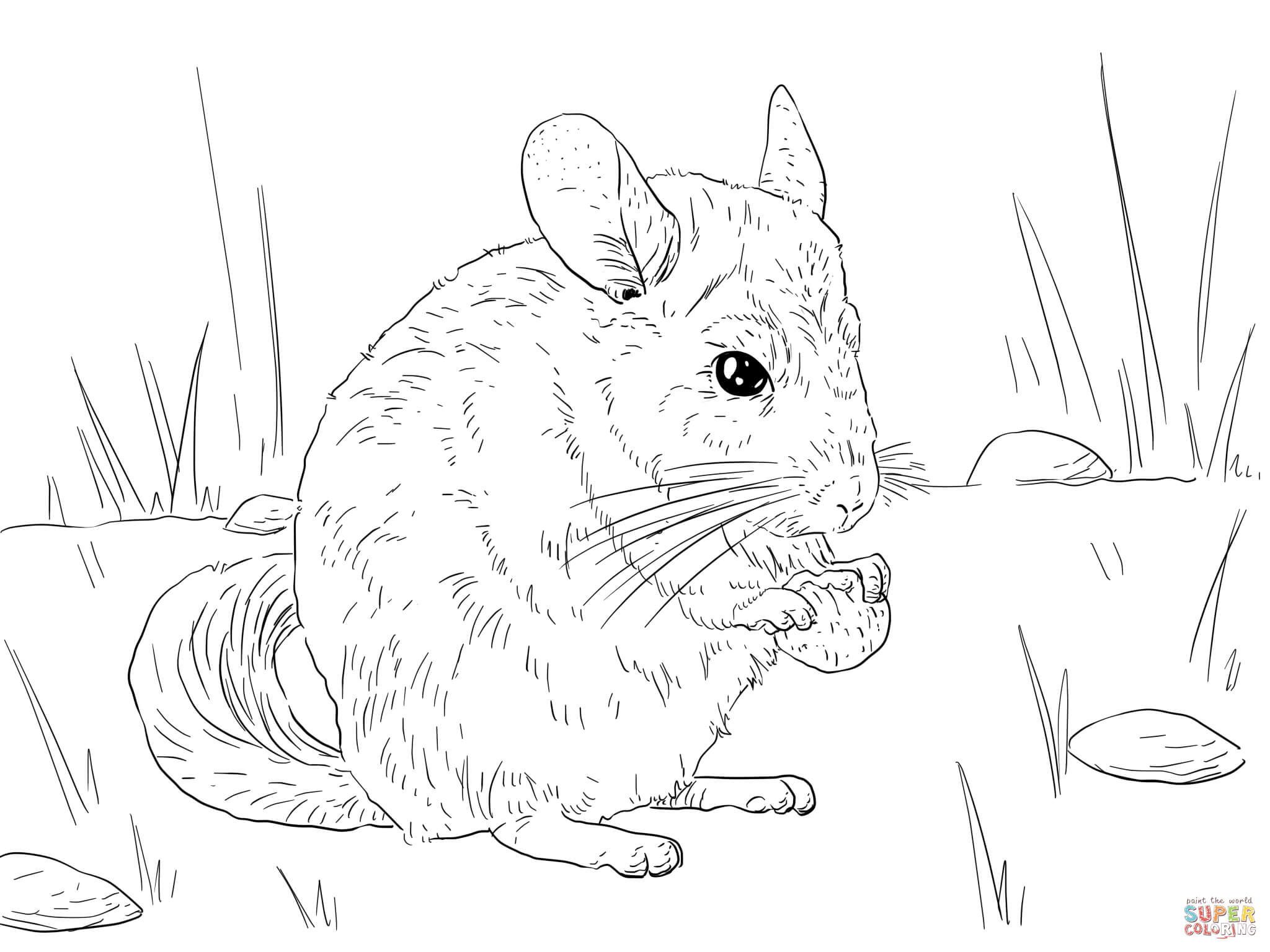 Chinchilla coloring pages to print