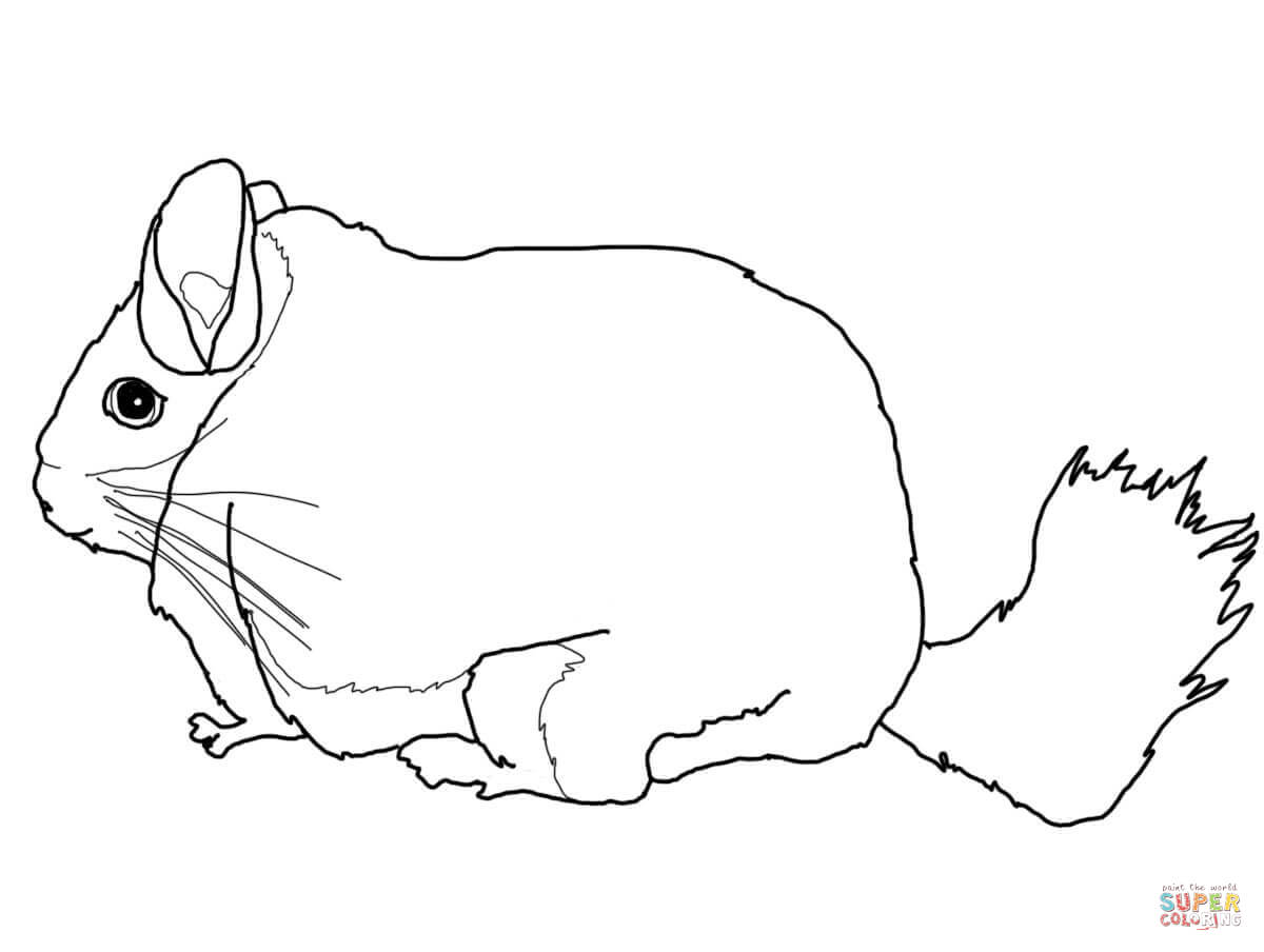chinchilla coloring pages to print chinchilla coloring pages to print coloring pages to chinchilla pages print coloring