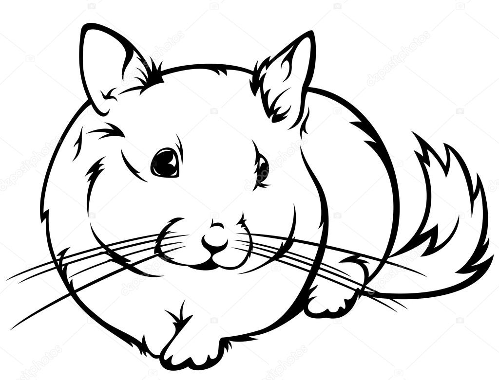 chinchilla coloring pages to print pics of chinchillas coloring home chinchilla to coloring print pages