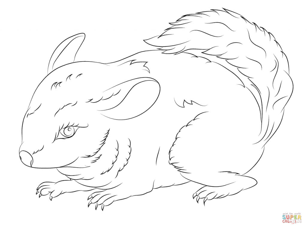 chinchilla coloring pages to print short tailed chinchilla coloring page free printable pages chinchilla coloring to print