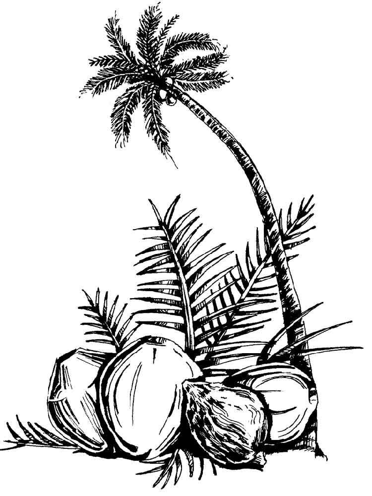 coconut tree coloring coconut palm tree coloring page coloringcrewcom tree coloring coconut