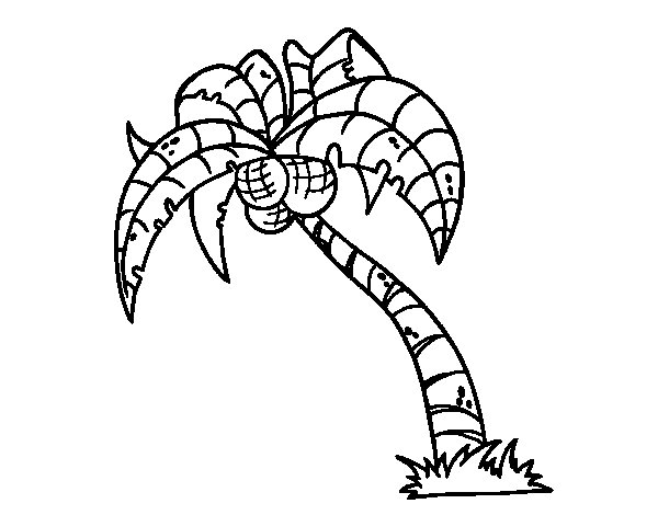 coconut tree coloring palm tree coloring pages coconut tree free printable coconut tree coloring