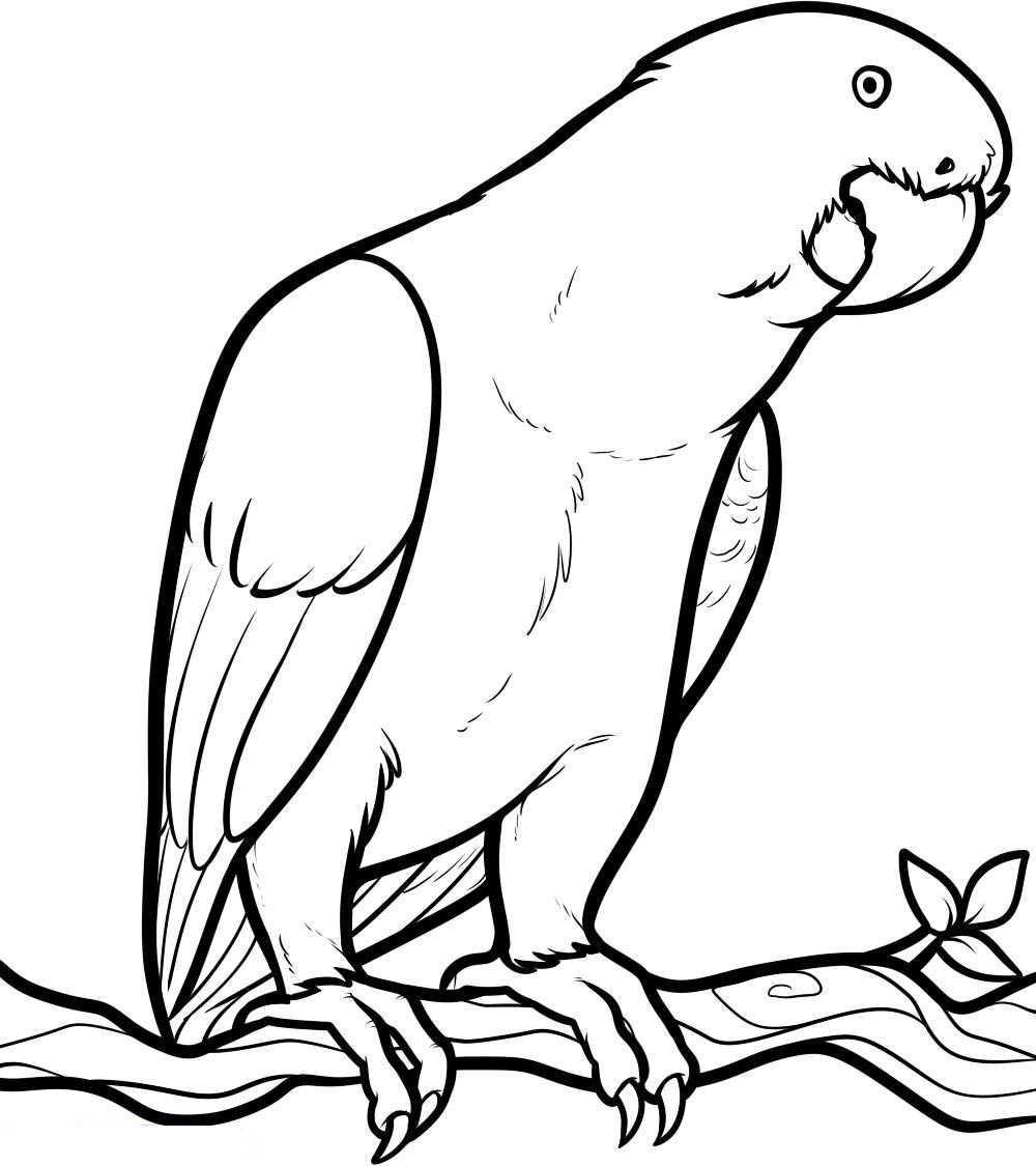 coloring bird for kids angry birds coloring pages for your small kids bird for coloring kids