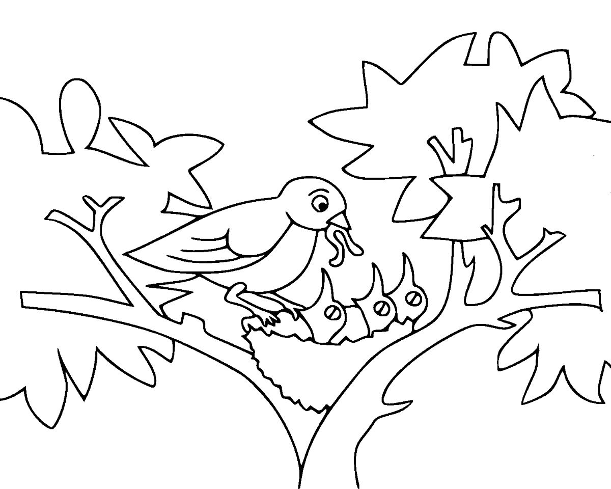 coloring bird for kids baby birds coloring page free printable coloring pages for bird kids coloring