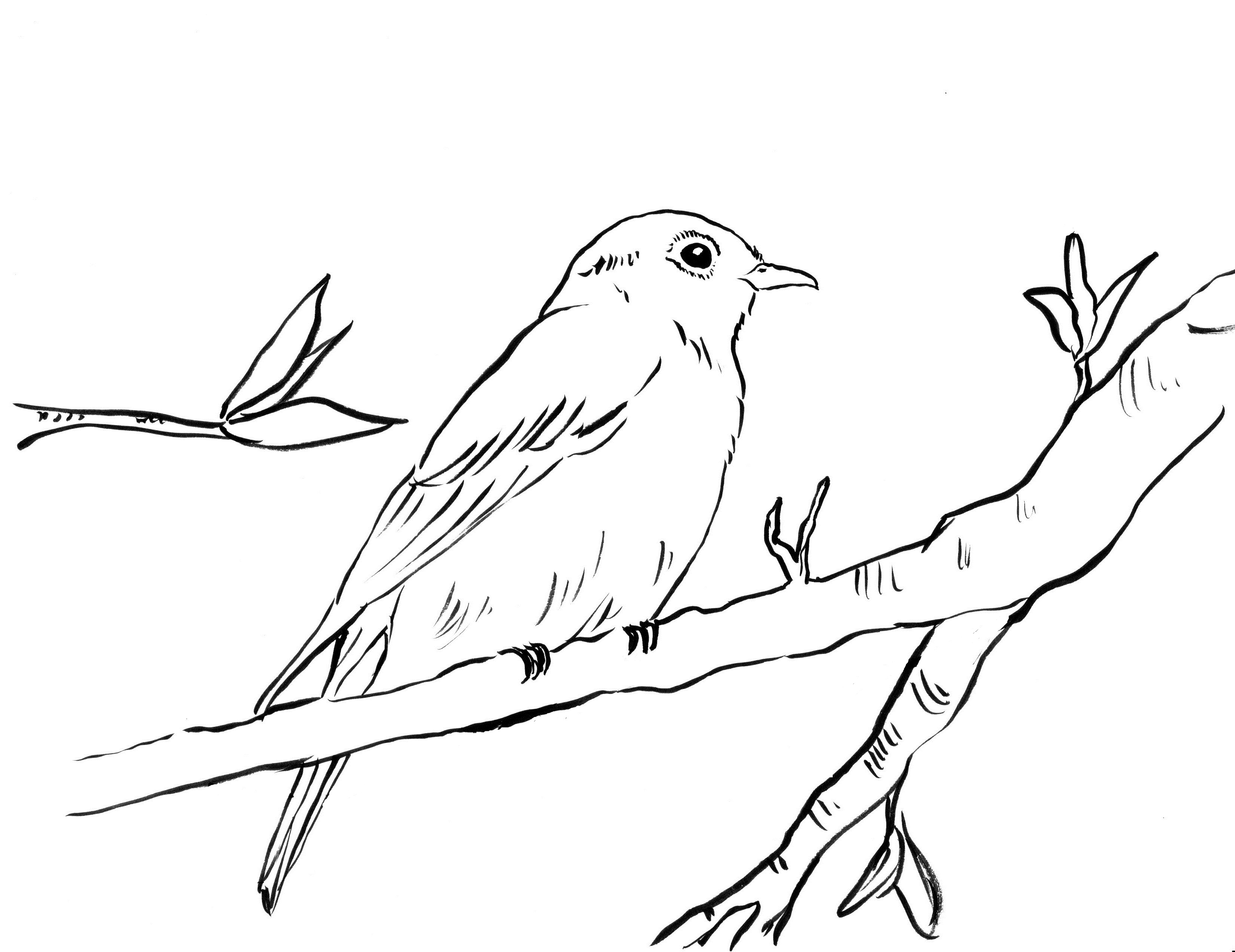 coloring bird for kids bird cage coloring page at getcoloringscom free bird coloring for kids