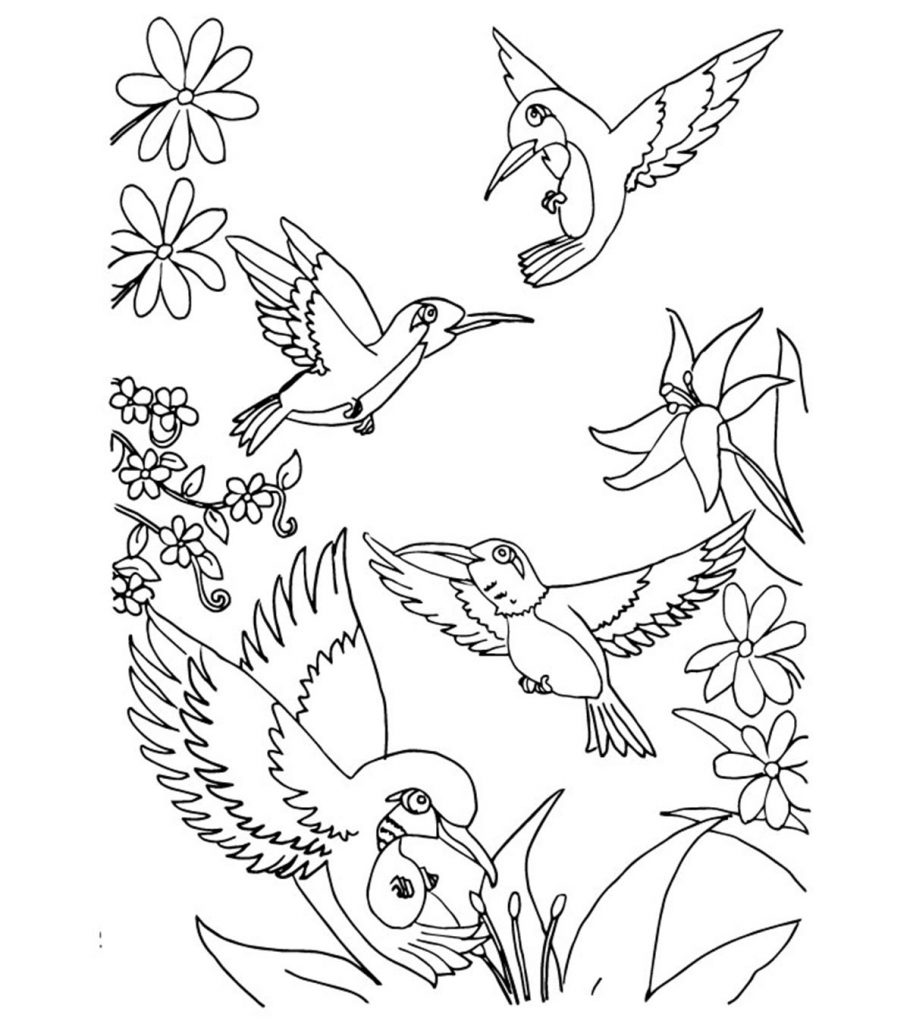 coloring bird for kids top 10 hummingbird coloring pages for your toddler coloring kids for bird