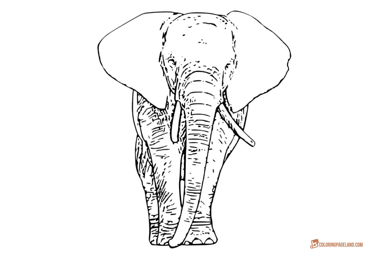 coloring book elephant images coloring pages elephant bestappsforkidscom elephant images book coloring