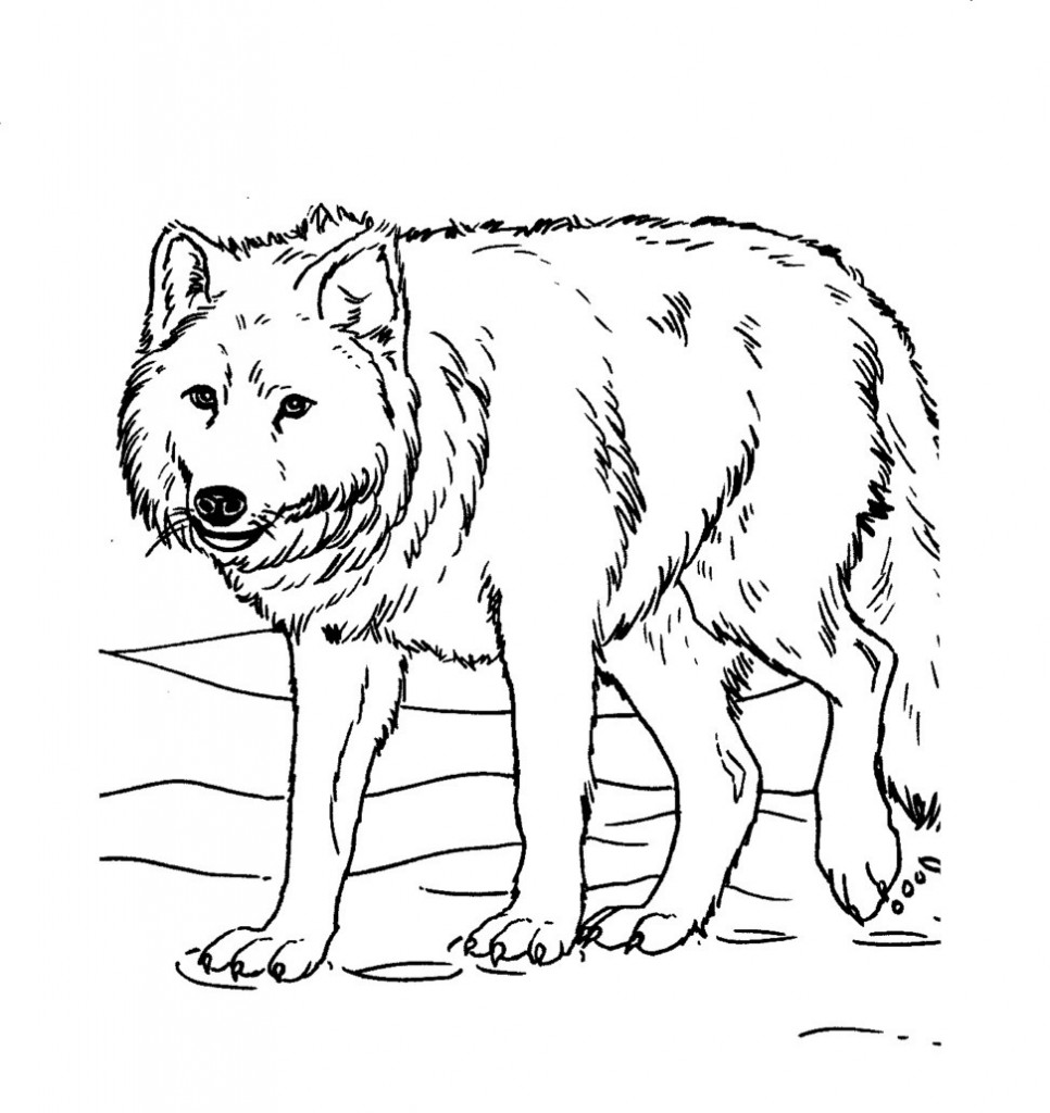 coloring book wolf wolves for coloring wolf book coloring