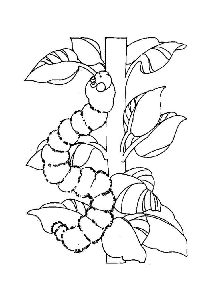 coloring caterpillar free printable caterpillar coloring pages for kids caterpillar coloring 1 3