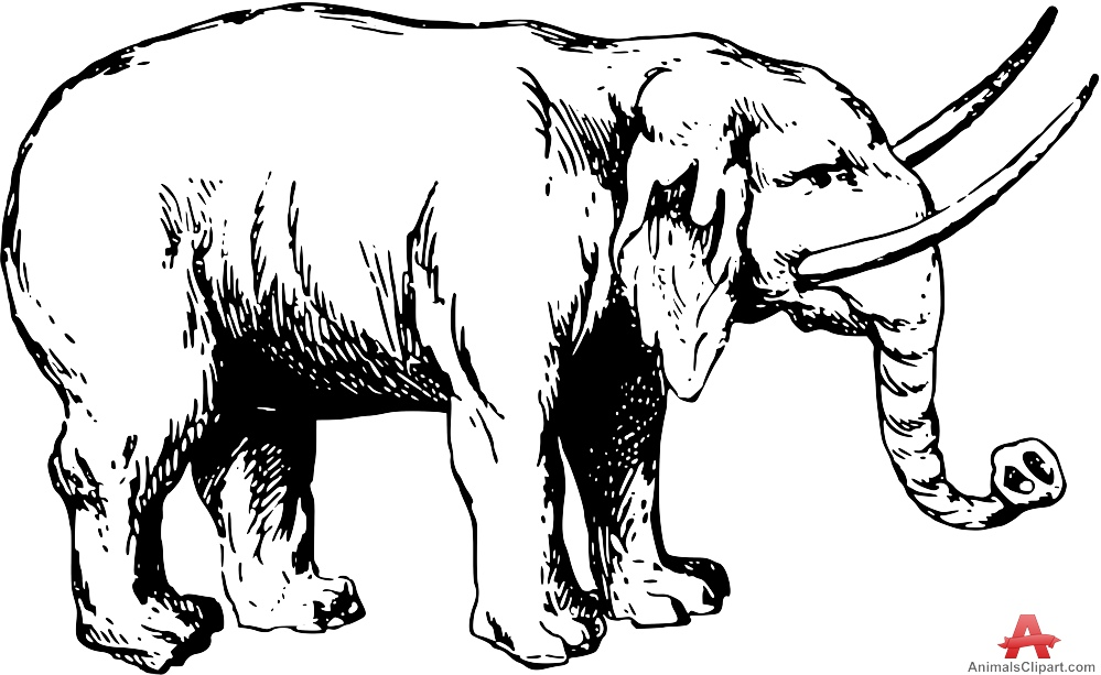 coloring elephant tusks pink coloring elephant tusks pink tusks pink elephant coloring