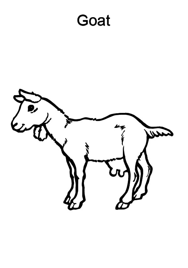 coloring goat coloring page goat a symbol of the year goat coloring