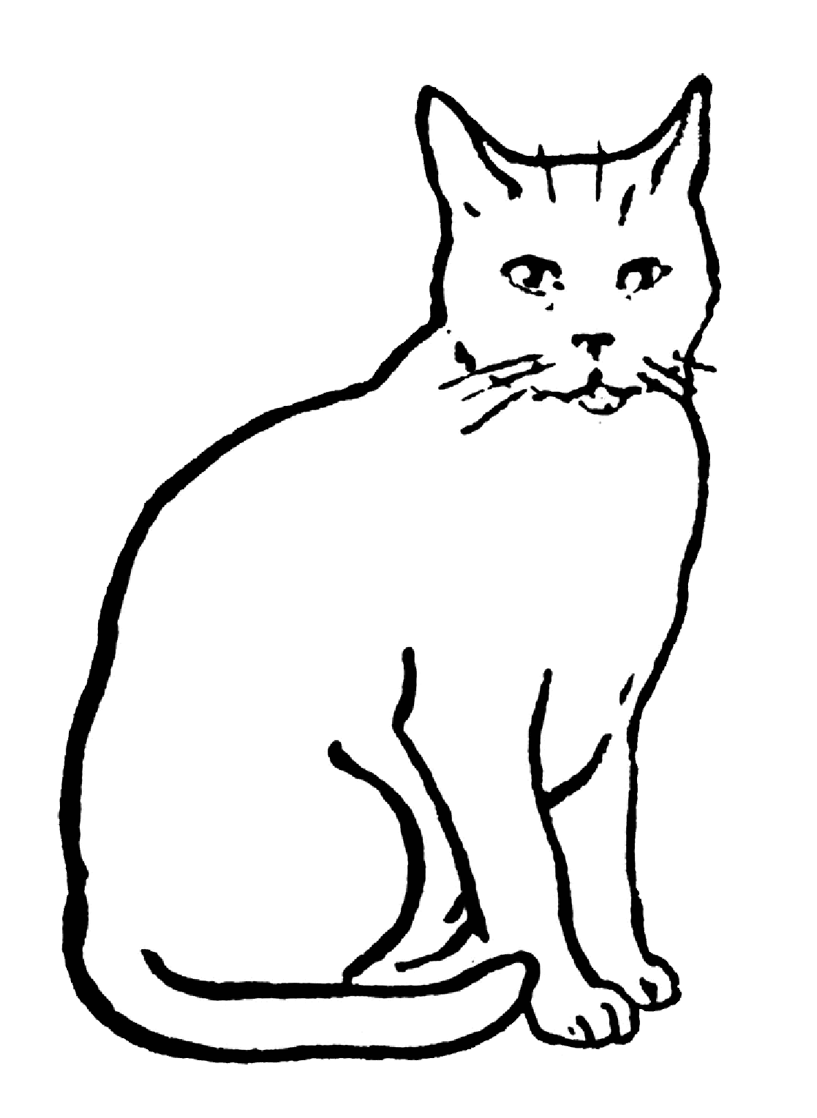 coloring image of cat cat coloring pages of cat coloring image
