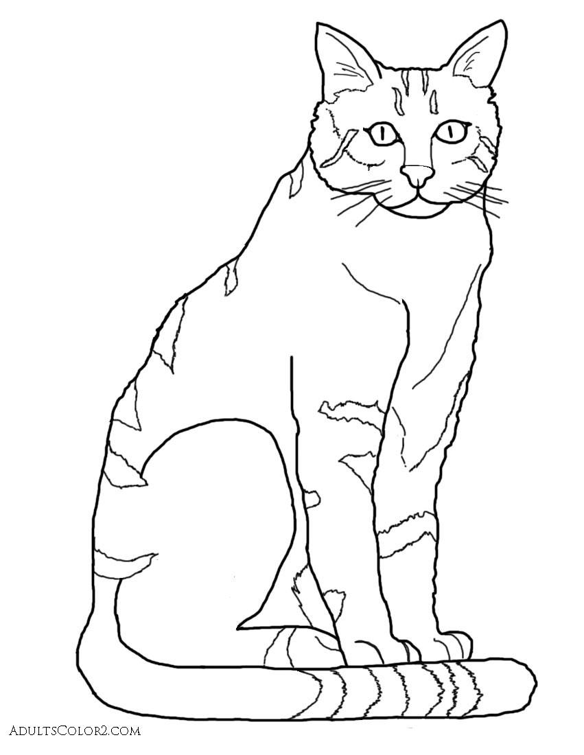 coloring image of cat cat coloring pages pint sized pumas on parade image of coloring cat