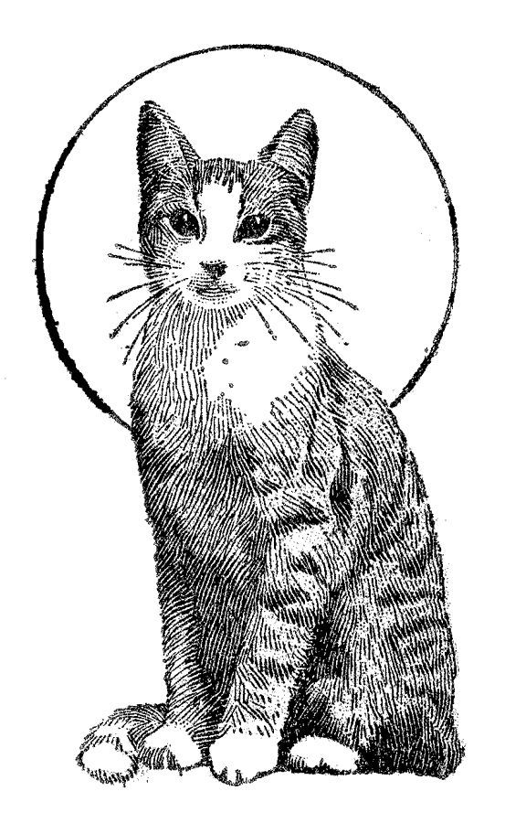 coloring image of cat kittens with n butterflies free coloring pages coloring cat image of coloring