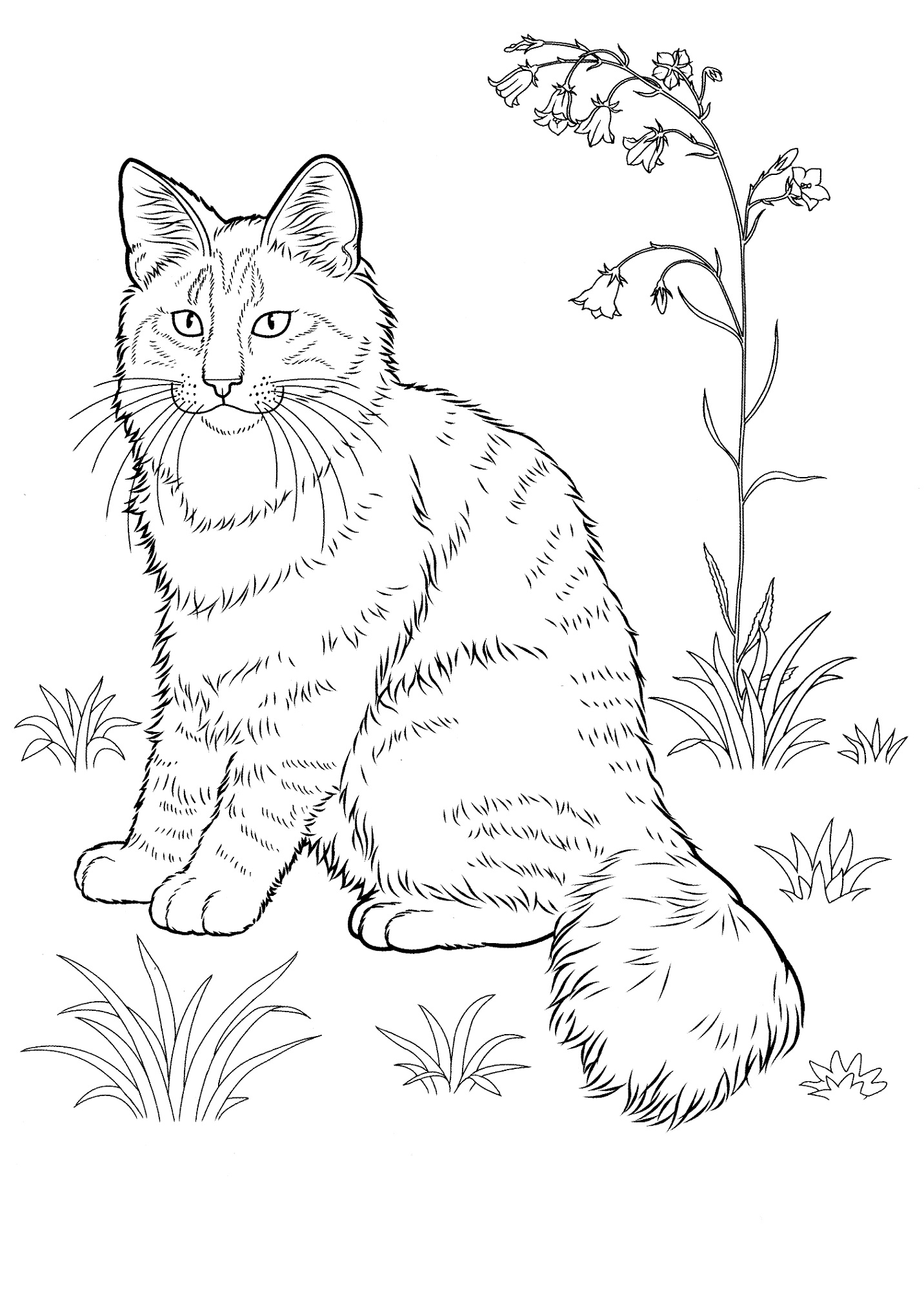 coloring image of cat very wise cat cats adult coloring pages coloring of cat image