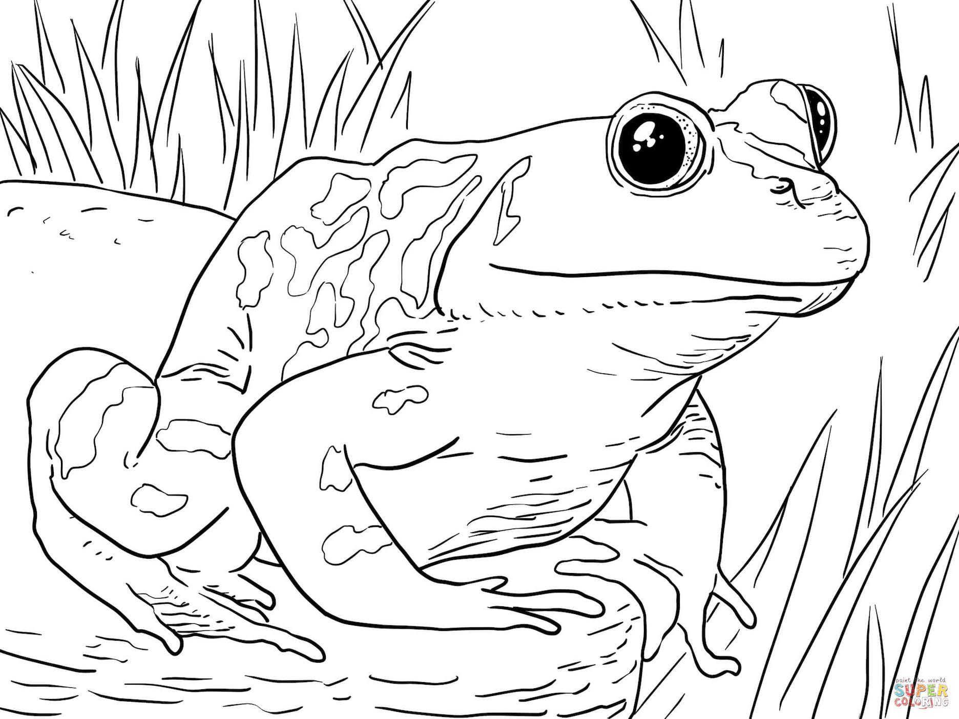 coloring images of frog frog coloring pages clipart and other free printable of images frog coloring